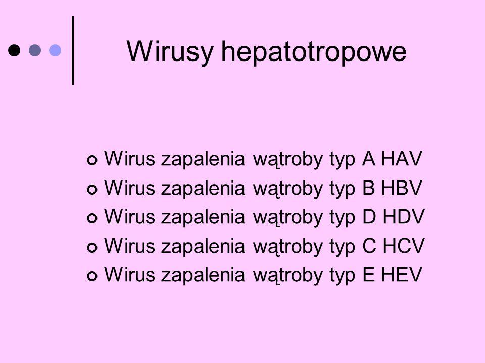 Wirusy hepatotropowe Wirus zapalenia wątroby typ A HAV
