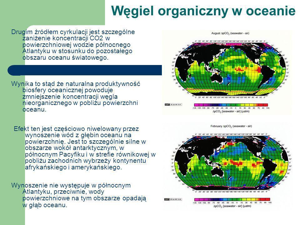 Węgiel organiczny w oceanie