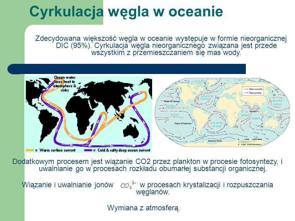 Cyrkulacja węgla w oceanie