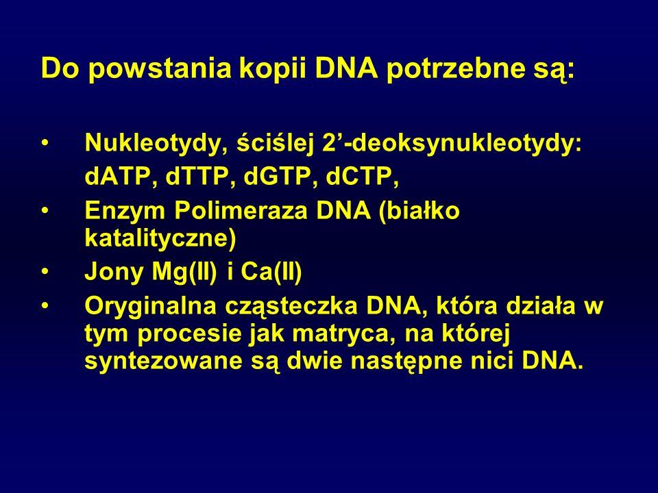 Do powstania kopii DNA potrzebne są: