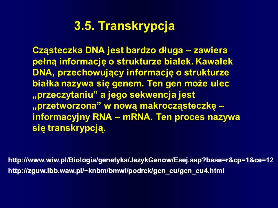 3.5. Transkrypcja