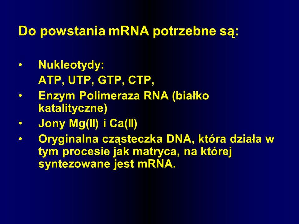 Do powstania mRNA potrzebne są: