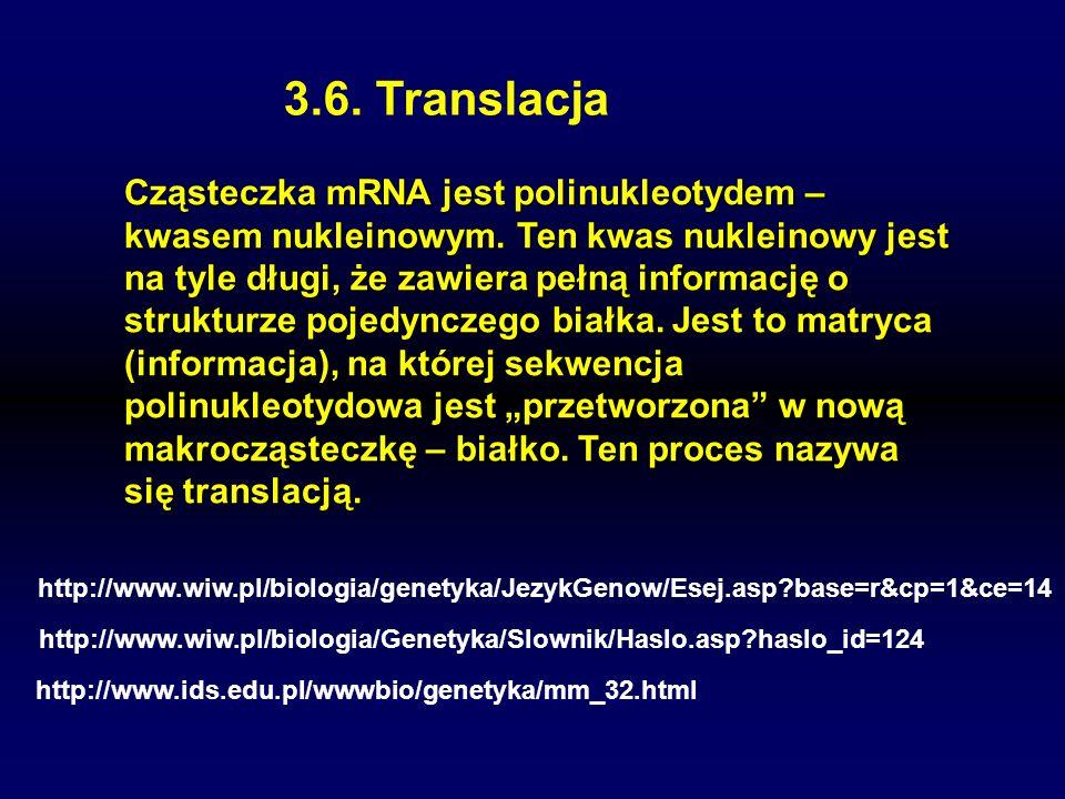 3.6. Translacja