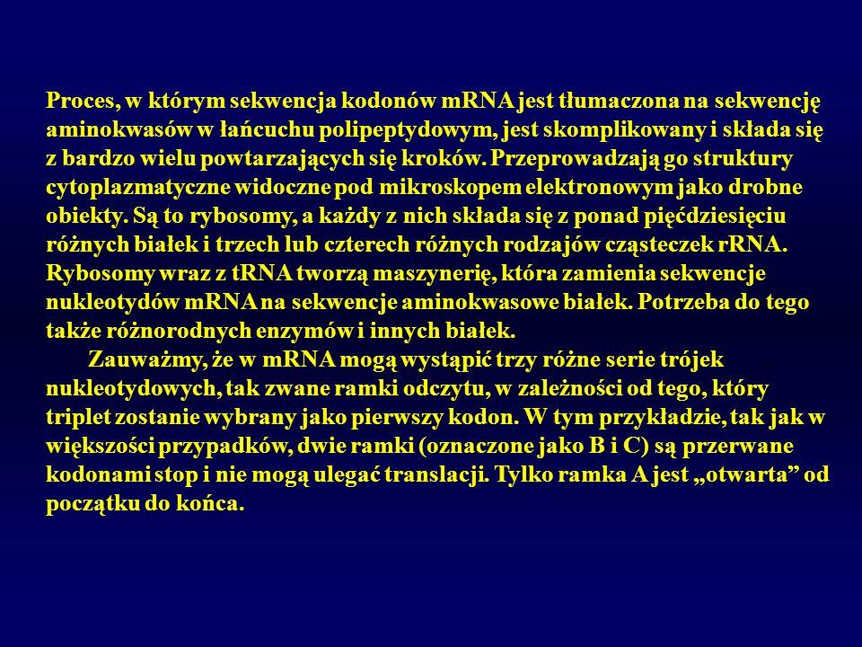 Proces, w którym sekwencja kodonów mRNA jest tłumaczona na sekwencję aminokwasów w łańcuchu polipeptydowym, jest skomplikowany i składa się z bardzo wielu powtarzających się kroków. Przeprowadzają go struktury cytoplazmatyczne widoczne pod mikroskopem elektronowym jako drobne obiekty. Są to rybosomy, a każdy z nich składa się z ponad pięćdziesięciu różnych białek i trzech lub czterech różnych rodzajów cząsteczek rRNA. Rybosomy wraz z tRNA tworzą maszynerię, która zamienia sekwencje nukleotydów mRNA na sekwencje aminokwasowe białek. Potrzeba do tego także różnorodnych enzymów i innych białek.