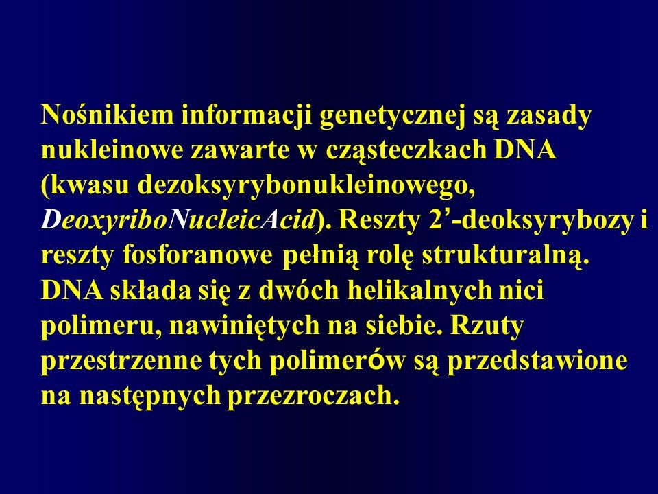 Nośnikiem informacji genetycznej są zasady nukleinowe zawarte w cząsteczkach DNA (kwasu dezoksyrybonukleinowego, DeoxyriboNucleicAcid).