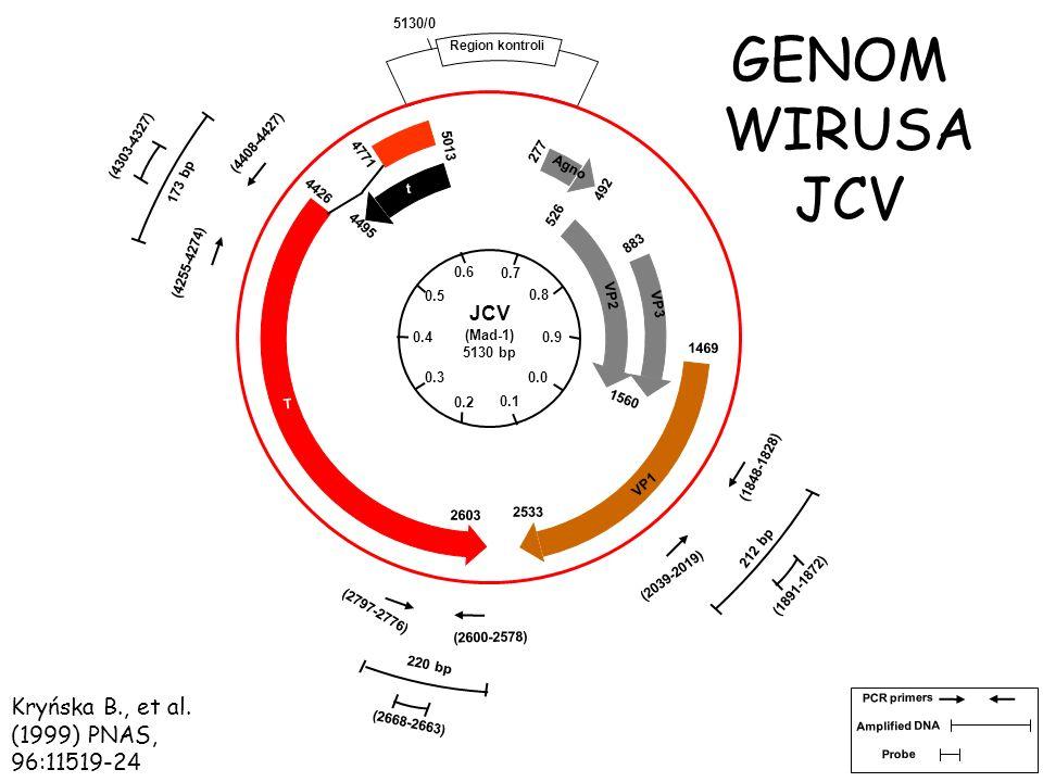 GENOM WIRUSA JCV Kryńska B., et al. (1999) PNAS, 96:11519-24 JCV 0.6