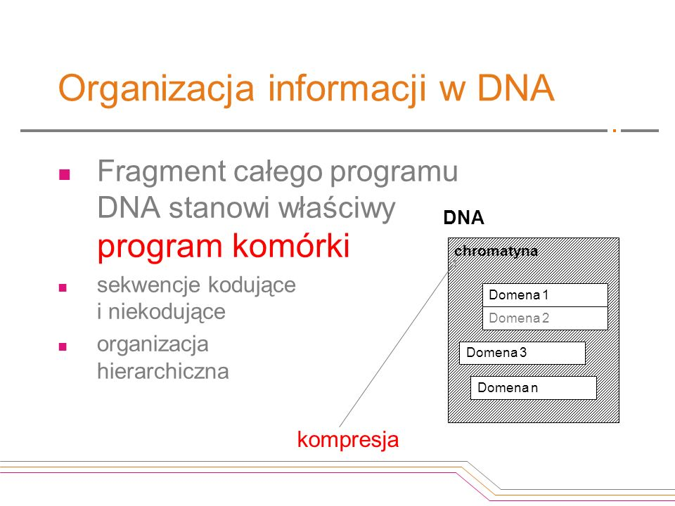 Organizacja informacji w DNA
