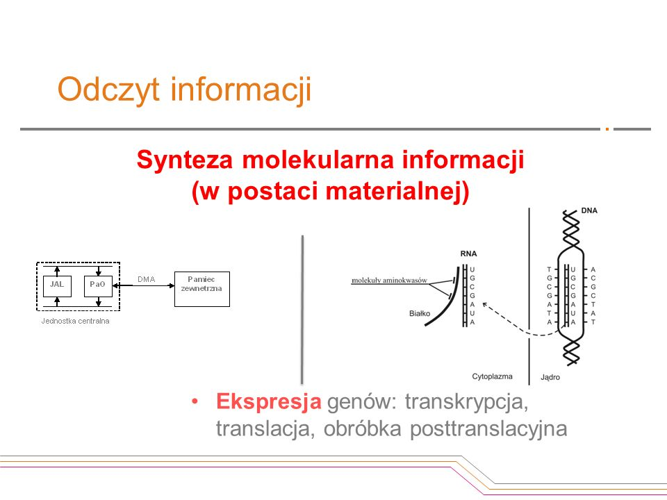 Synteza molekularna informacji (w postaci materialnej)