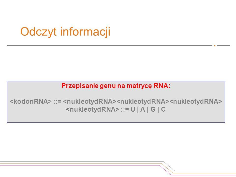 Odczyt informacji Przepisanie genu na matrycę RNA:
