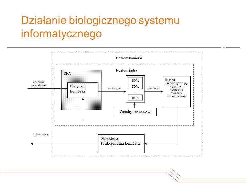 Działanie biologicznego systemu informatycznego
