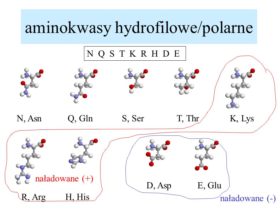 aminokwasy hydrofilowe/polarne