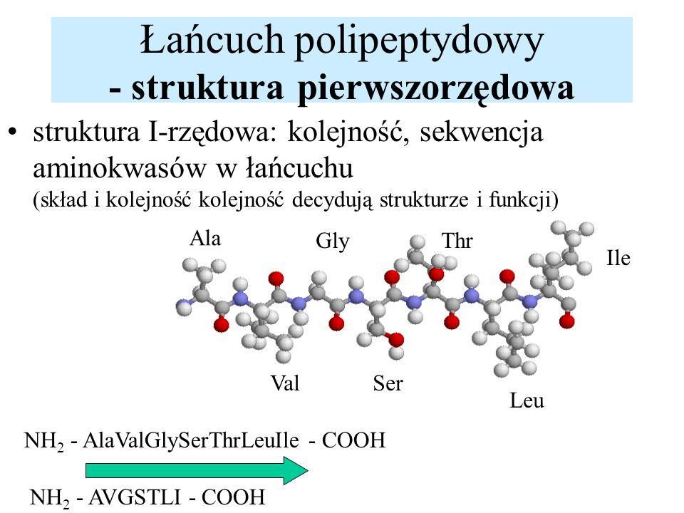 Łańcuch polipeptydowy - struktura pierwszorzędowa