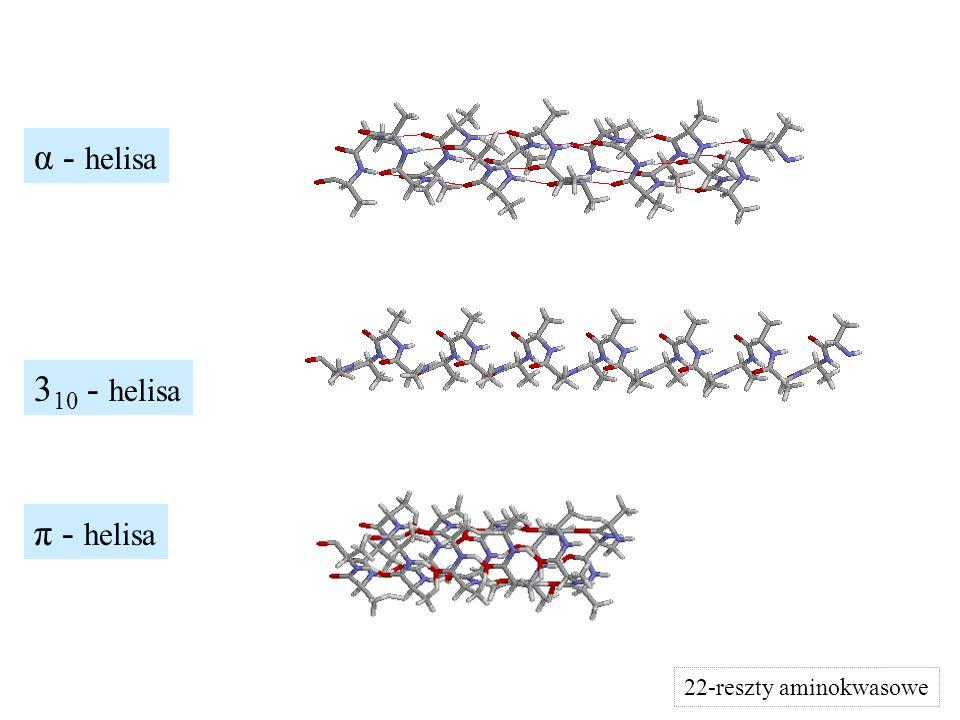 α - helisa 310 - helisa π - helisa 22-reszty aminokwasowe