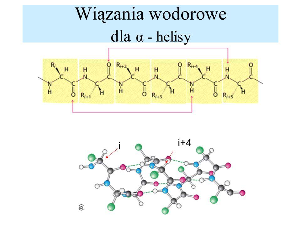 Wiązania wodorowe dla α - helisy