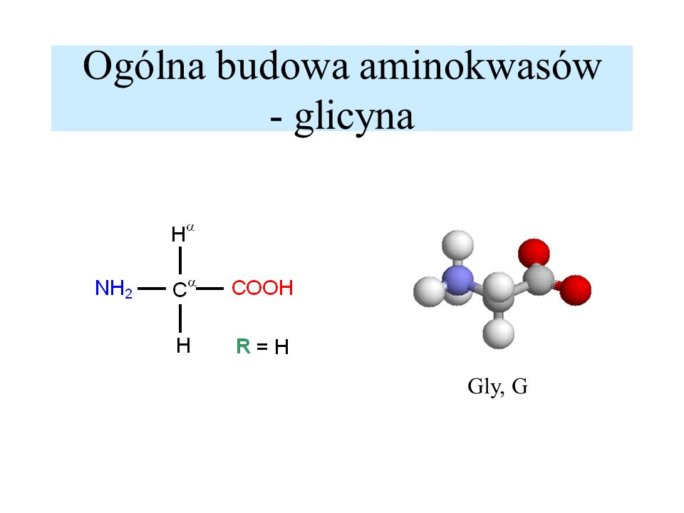 Ogólna budowa aminokwasów - glicyna