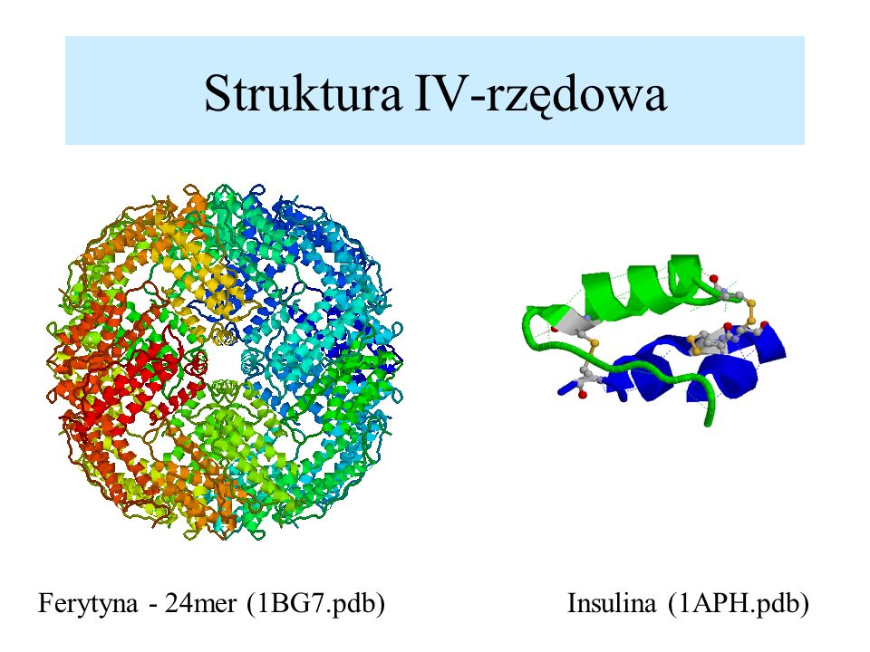 Struktura IV-rzędowa Ferytyna - 24mer (1BG7.pdb) Insulina (1APH.pdb)