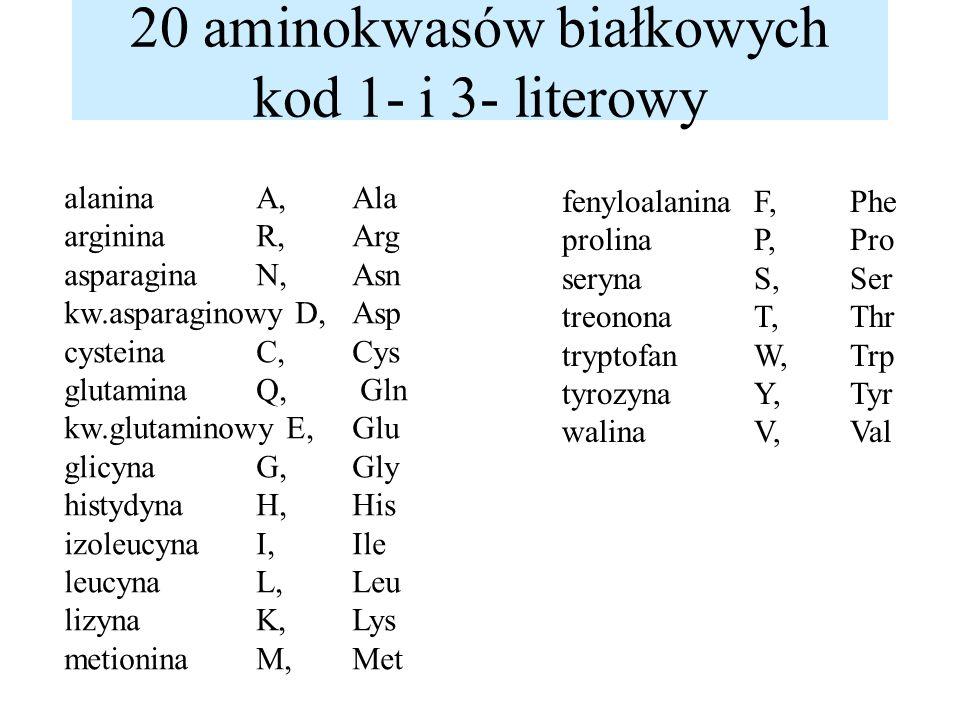 20 aminokwasów białkowych kod 1- i 3- literowy