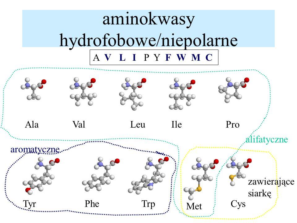 aminokwasy hydrofobowe/niepolarne