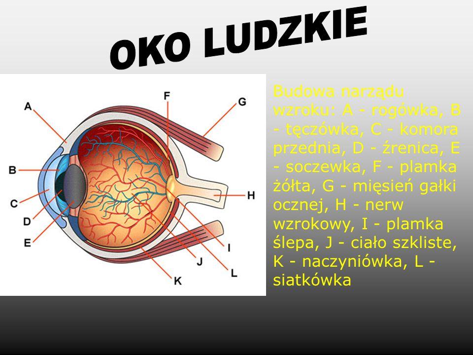 OKO LUDZKIE