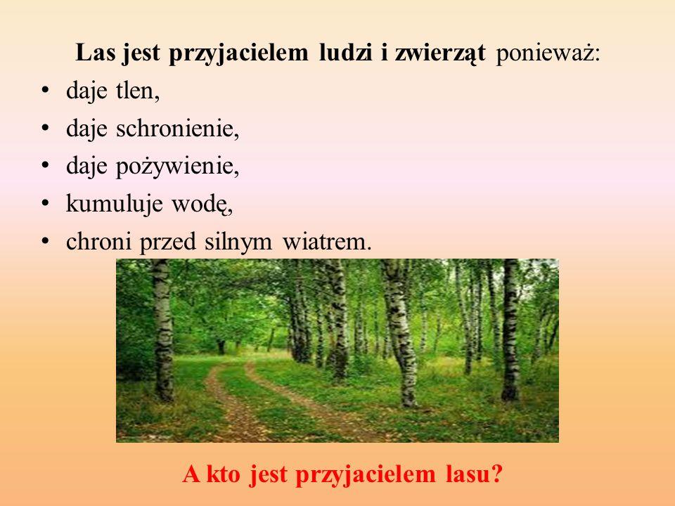 A kto jest przyjacielem lasu