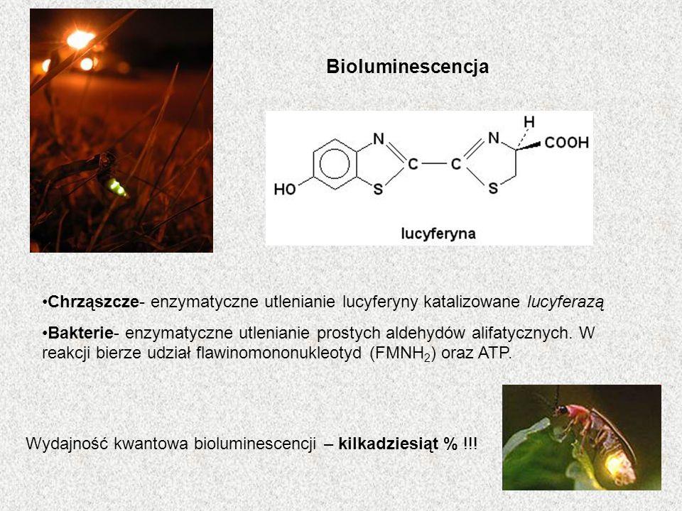 Bioluminescencja Chrząszcze- enzymatyczne utlenianie lucyferyny katalizowane lucyferazą.