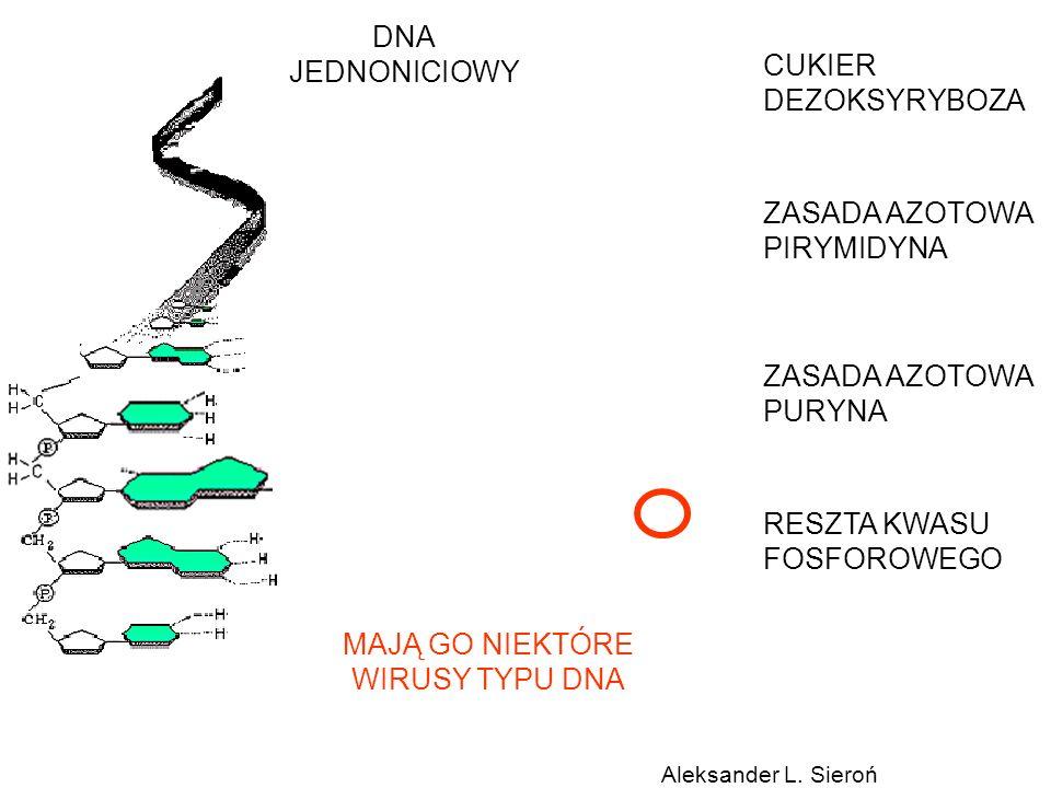 DNA JEDNONICIOWY CUKIER DEZOKSYRYBOZA ZASADA AZOTOWA PIRYMIDYNA