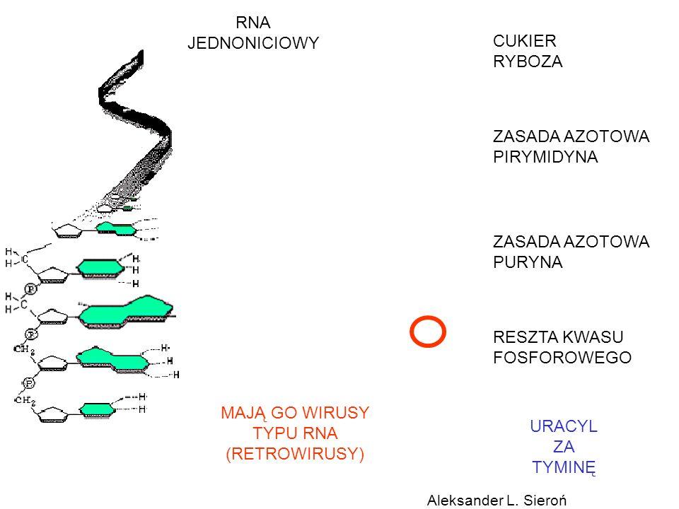 RNA JEDNONICIOWY CUKIER RYBOZA ZASADA AZOTOWA PIRYMIDYNA