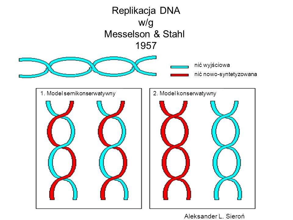 Replikacja DNA w/g Messelson & Stahl 1957 Aleksander L. Sieroń