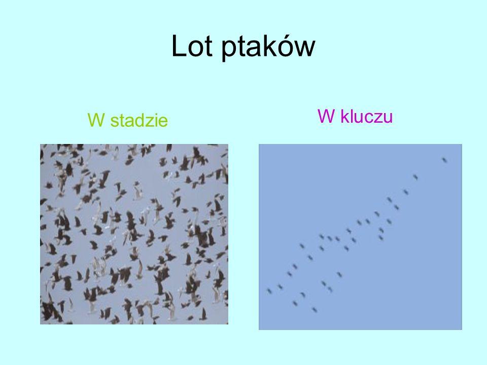 Lot ptaków W kluczu W stadzie