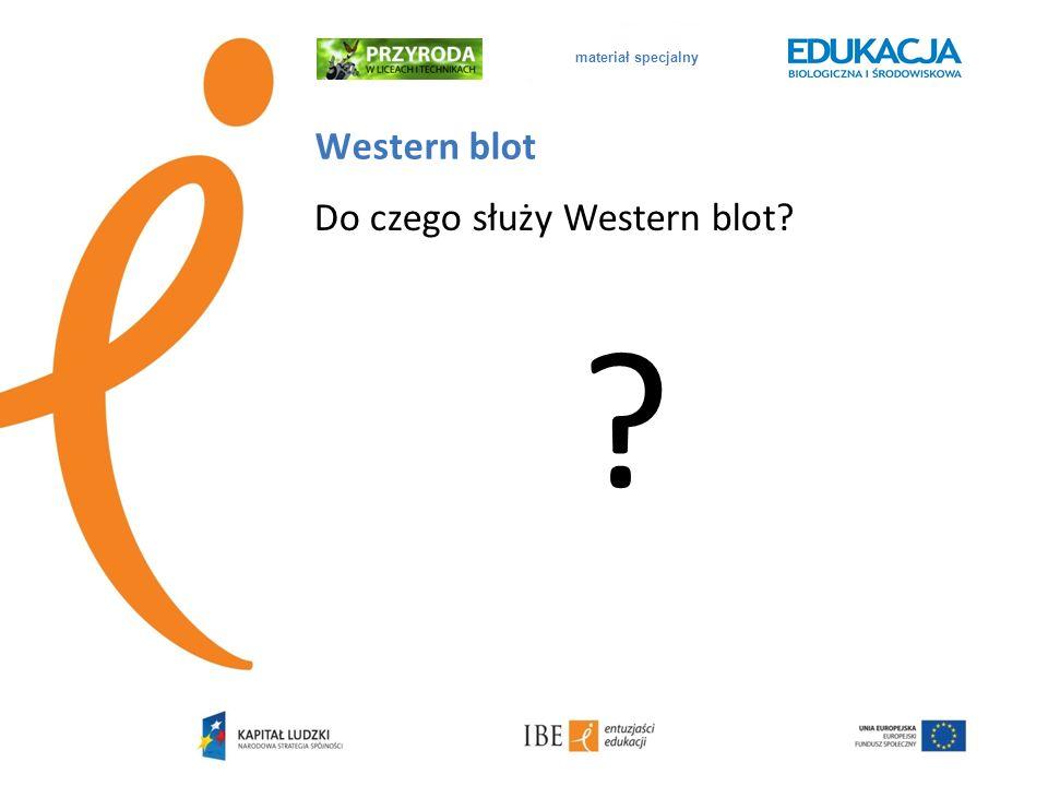 materiał specjalny Western blot Do czego służy Western blot