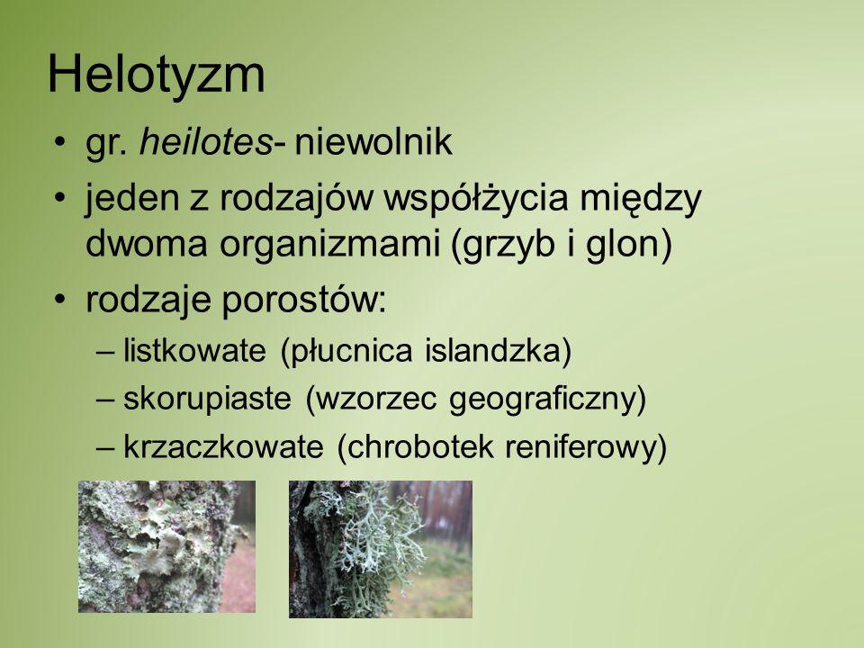 Helotyzm gr. heilotes- niewolnik