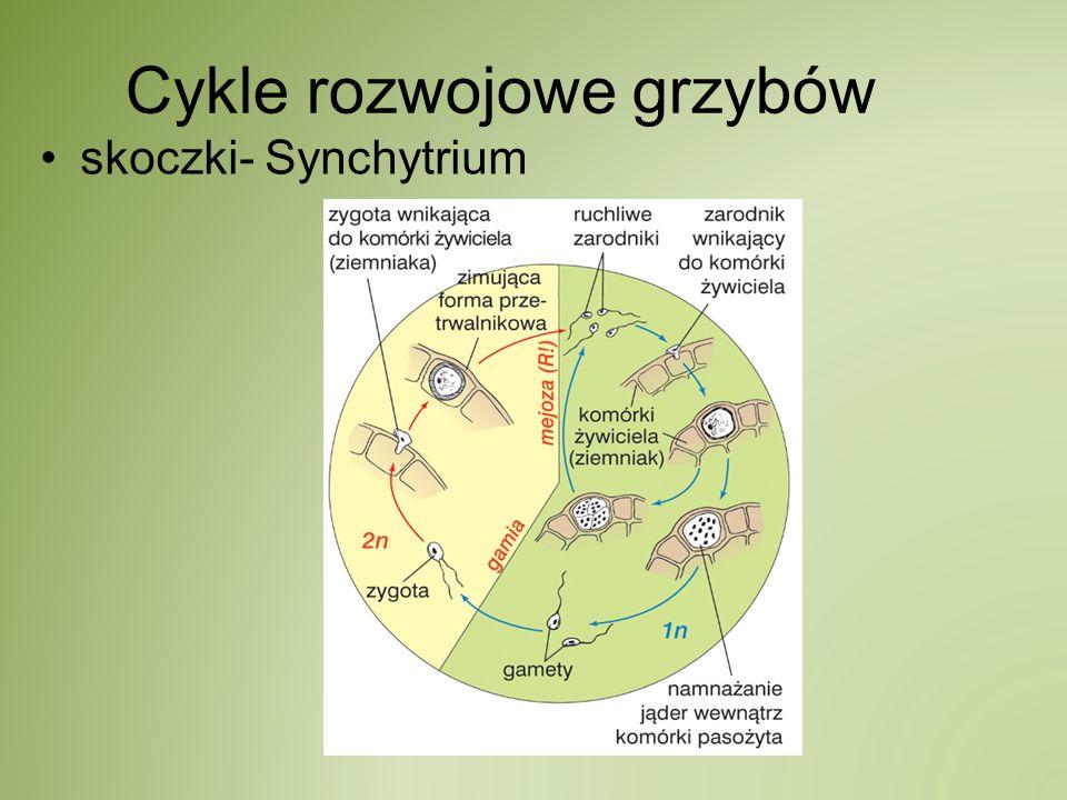 Cykle rozwojowe grzybów