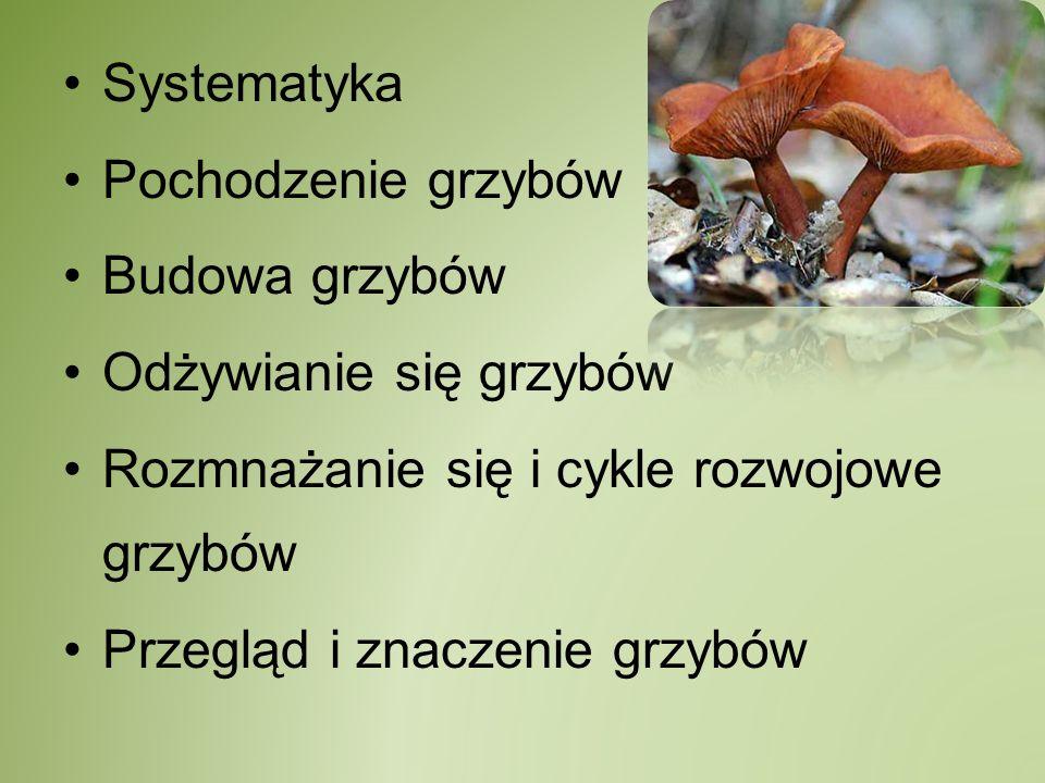 Systematyka Pochodzenie grzybów. Budowa grzybów. Odżywianie się grzybów. Rozmnażanie się i cykle rozwojowe grzybów.