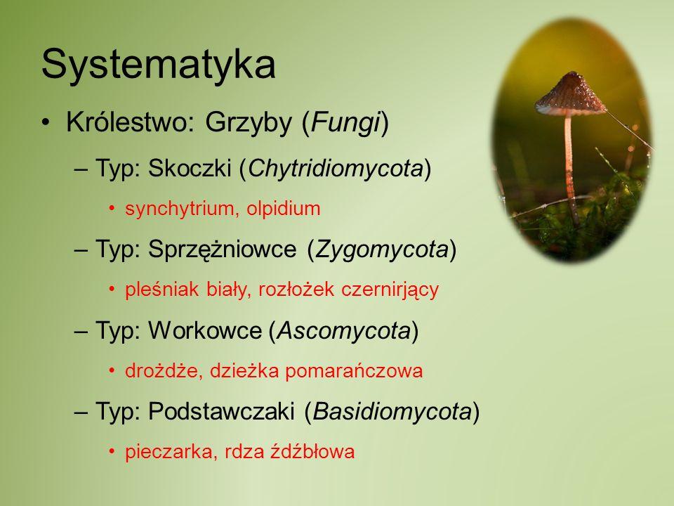 Systematyka Królestwo: Grzyby (Fungi) Typ: Skoczki (Chytridiomycota)