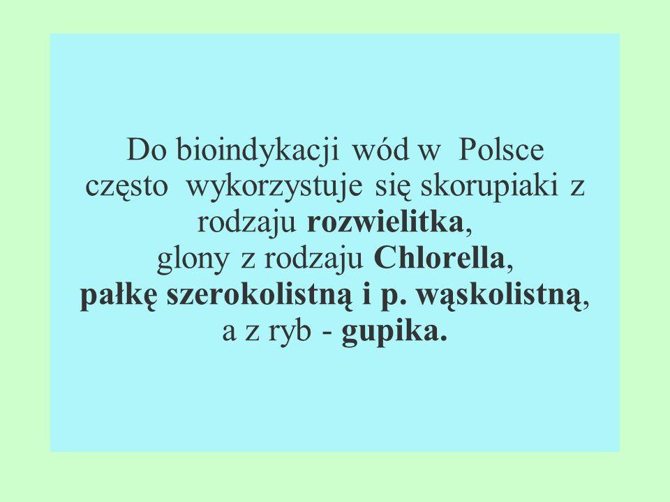 Do bioindykacji wód w Polsce często wykorzystuje się skorupiaki z rodzaju rozwielitka, glony z rodzaju Chlorella, pałkę szerokolistną i p.