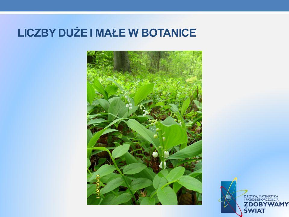Liczby duże i małe w botanice