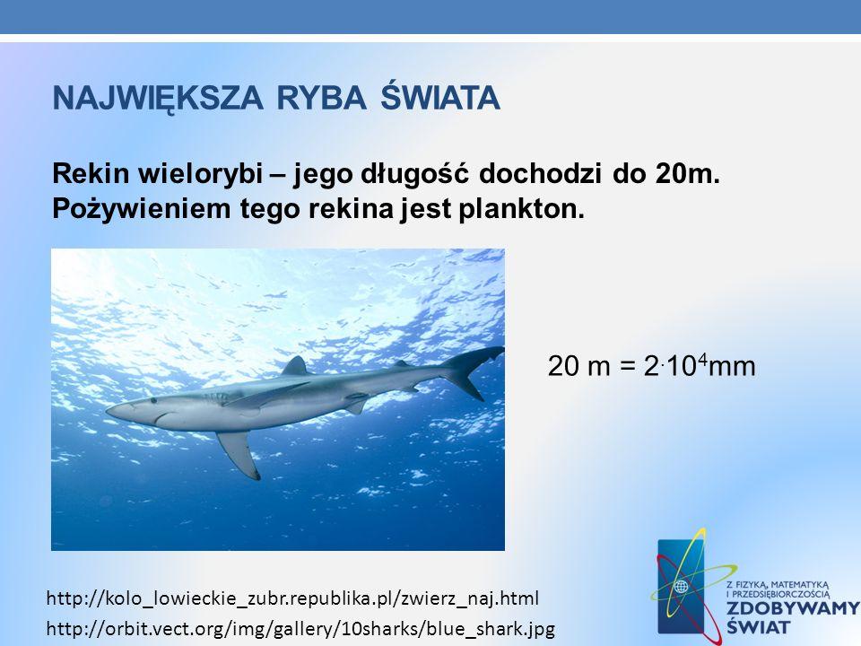 Największa ryba świata