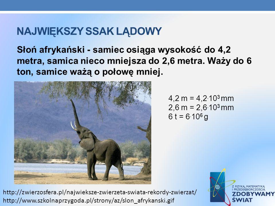 Największy ssak lądowy