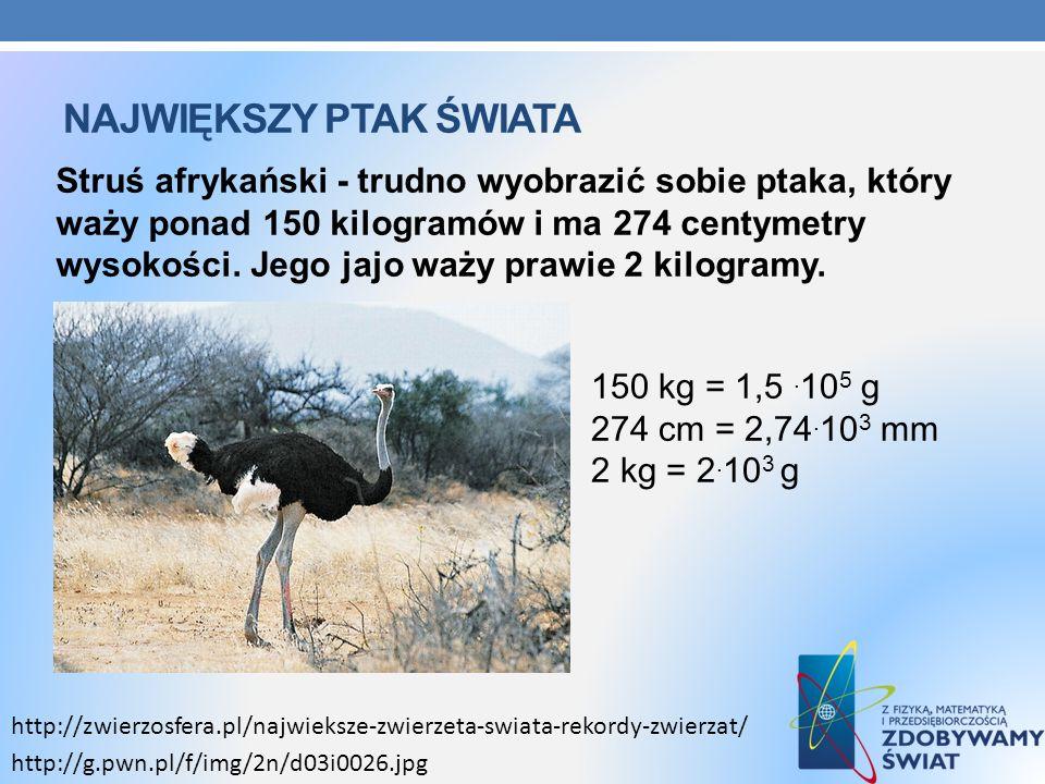 Największy ptak świata