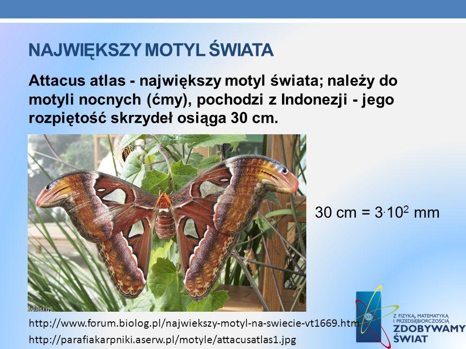 Największy motyl świata