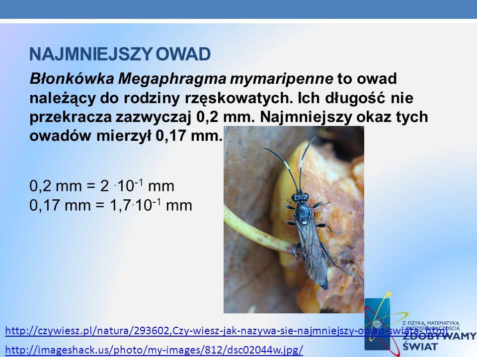 Najmniejszy owad