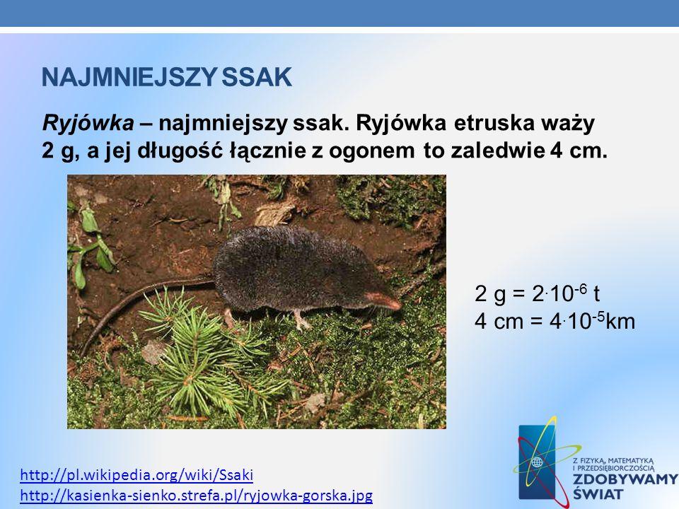 Najmniejszy ssakRyjówka – najmniejszy ssak. Ryjówka etruska waży 2 g, a jej długość łącznie z ogonem to zaledwie 4 cm.