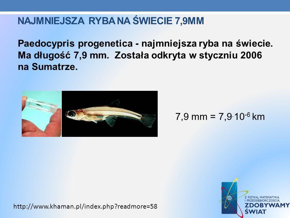 Najmniejsza ryba na świecie 7,9mm