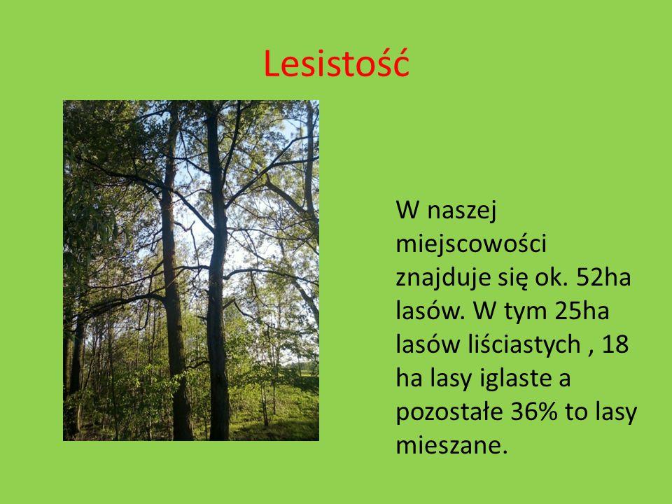 Lesistość W naszej miejscowości znajduje się ok. 52ha lasów.