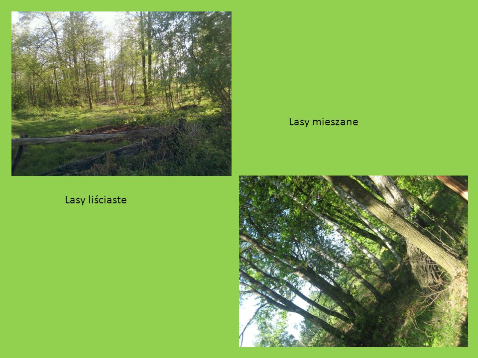 Lasy mieszane Lasy liściaste