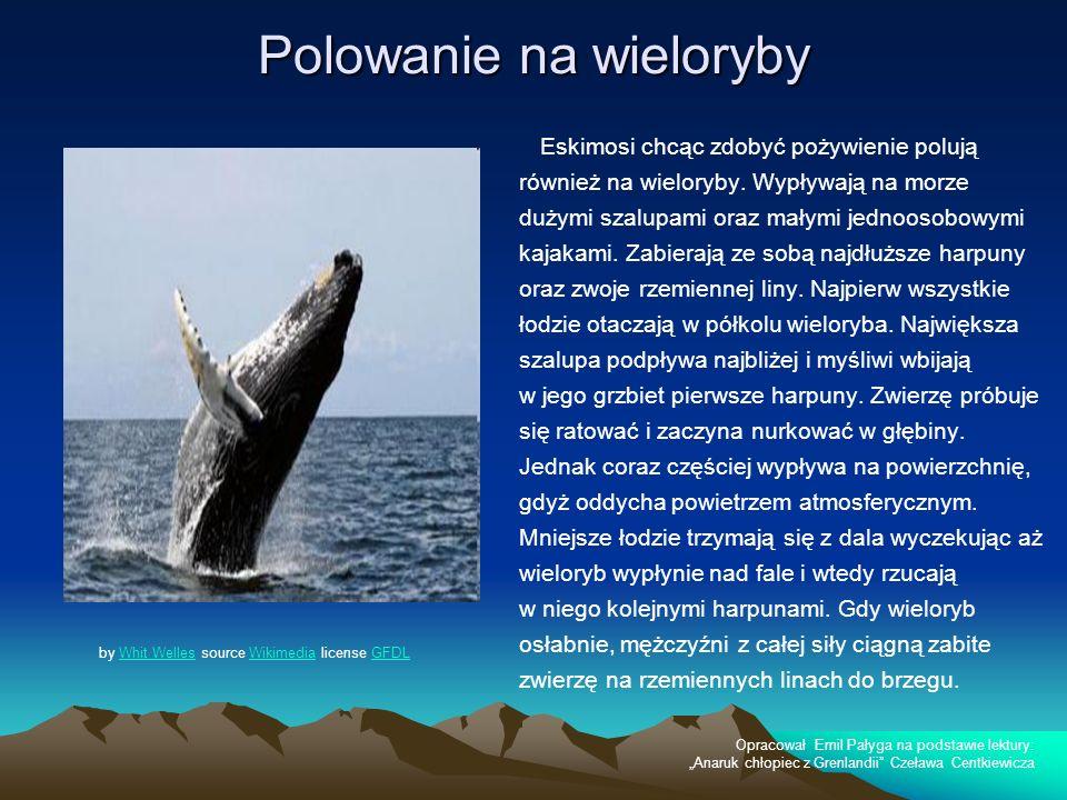 Polowanie na wieloryby