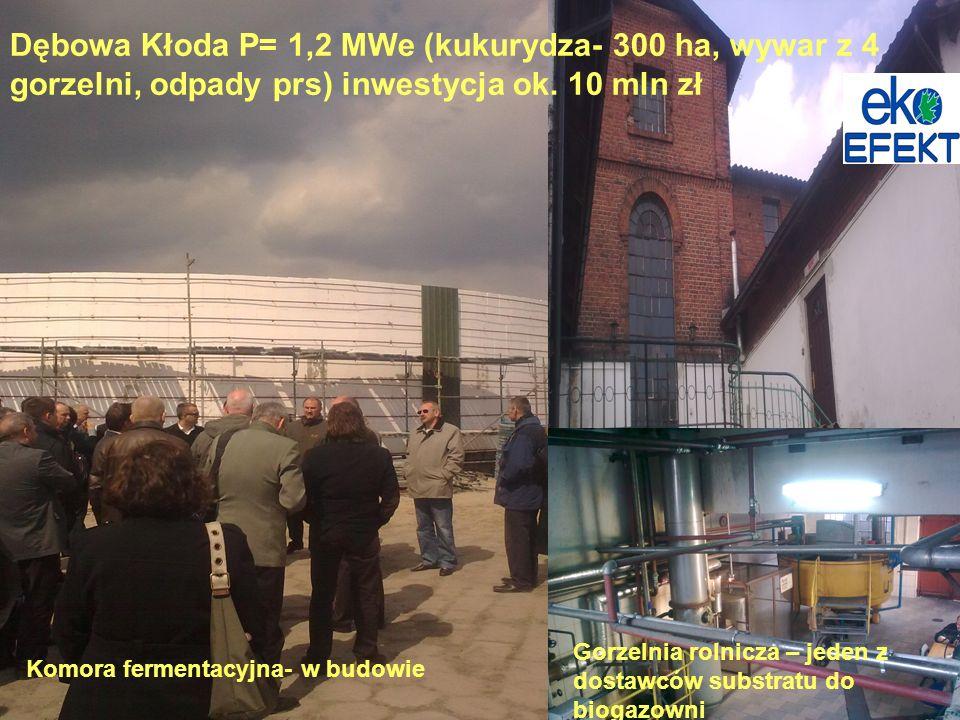 Dębowa Kłoda P= 1,2 MWe (kukurydza- 300 ha, wywar z 4 gorzelni, odpady prs) inwestycja ok. 10 mln zł