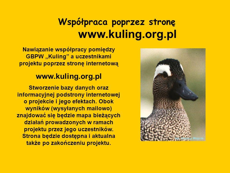 Współpraca poprzez stronę www.kuling.org.pl