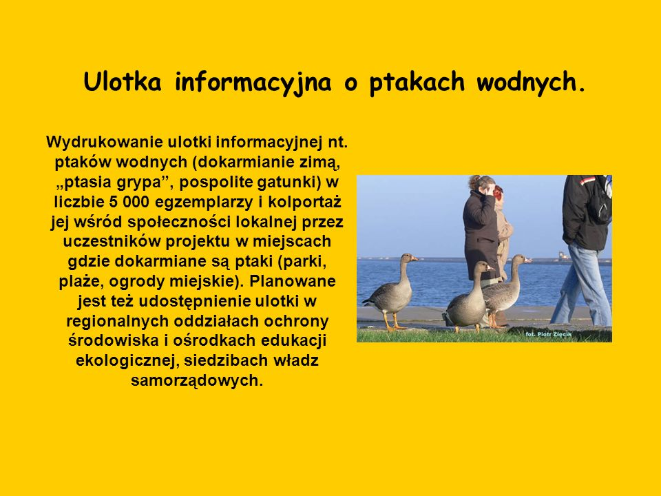Ulotka informacyjna o ptakach wodnych.