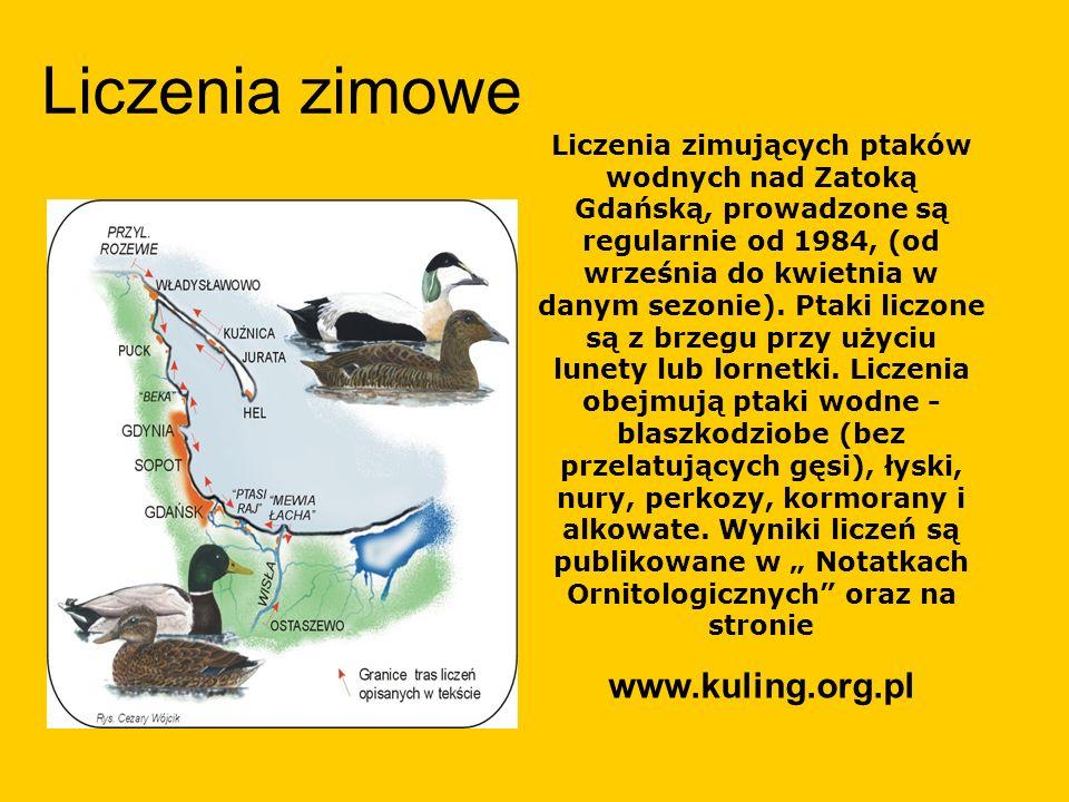 Liczenia zimowe www.kuling.org.pl